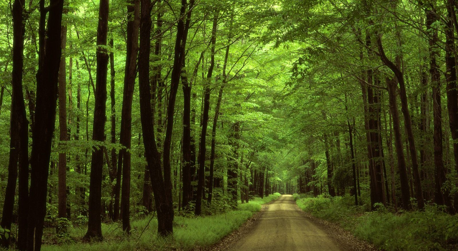 Forest | Location Scouting | Film in Mexico